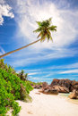 Palm tree at paradise beach of seychelles la digue anse cocos vertical Royalty Free Stock Photography