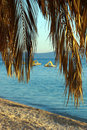 Palm tree and pedal boats Royalty Free Stock Photo