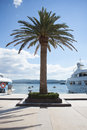 Palm tree on peer summer day Royalty Free Stock Image