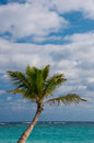 Palm tree punta cana beach dominican republic Royalty Free Stock Photos