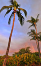 Palm tree and Rainbow Royalty Free Stock Photo