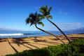 Palm tree reflections on beach Royalty Free Stock Photo