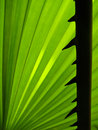 Palm tree's thorn Royalty Free Stock Photography