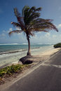 Palm tree and the san andres island beach on side of road Royalty Free Stock Images