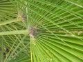 Palm-Tree In San Diego, California Royalty Free Stock Photo