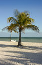 Palm tree on sandy beach with a boat beached in background Stock Photography