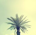 Palm tree on a Sardinian beach, retro film style Royalty Free Stock Photo