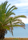 Palm tree by the sea shore beach Royalty Free Stock Photography