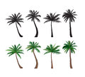 Palm tree set Nature floral design elements Tropical plant trees Royalty Free Stock Photo