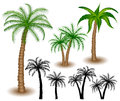 Palm tree set with silhouettes Royalty Free Stock Images