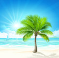 Palm tree with shadow on white vector Stock Photo