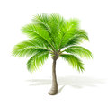 Palm tree with shadow on white vector Stock Images