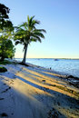 Palm Tree By The Shore Royalty Free Stock Photo