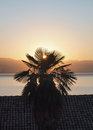 Palm tree silhouette on a background the coast of croatia and ascending sun Stock Image