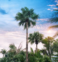 Palm tree silhouette on paradise sunset the beach Stock Photography