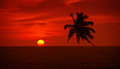 Palm tree silhouette on sunset sky background Royalty Free Stock Photo