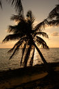 Palm tree silhouette in tropical location and ocean Stock Photos
