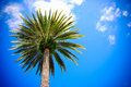 Palm tree and the sky Royalty Free Stock Photography