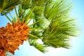 Palm_tree_sky 库存照片
