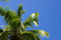Palm tree on the sky Royalty Free Stock Photo