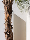 Palm tree southwestern architecture detail desert california Stock Images
