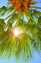 Palm_tree_sunlight 免版税图库摄影