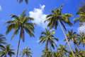 Palm tree with sunny day. Thailand. Koh Samui island. Royalty Free Stock Photo