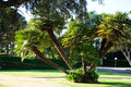 Palm tree in sunny park los angeles Stock Photography