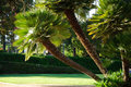 Palm tree in sunny park los angeles Royalty Free Stock Photo