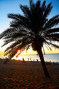 Palm Tree at Sunset Royalty Free Stock Photo