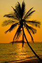 Palm tree with sunset Stock Photo