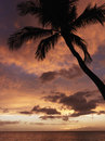 Palm tree at sunset Stock Image