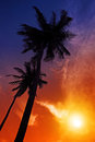 Palm tree sunset on beach tropical Stock Images
