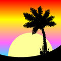 Palm tree at sunset. Royalty Free Stock Photo