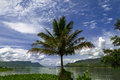 Palm tree on toba lake samosir island north sumatra indonesia Stock Photography