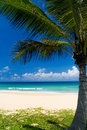 Palm tree on a tropical beach Stock Image