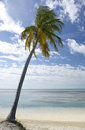 Palm tree on tropical beach Stock Photos