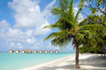 Palm tree on tropical beach Royalty Free Stock Image
