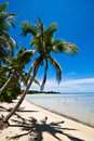 Palm tree on a tropical beach Stock Photos