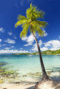 Palm tree at tropical beach caribbean sea sailboat in background Royalty Free Stock Photography