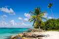 Palm tree on the tropical beach dominican republic saona island caribbean sea Stock Photography