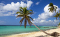 Palm tree on tropical beach panorama of paradise caribbean Stock Images
