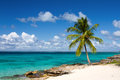 Palm tree on the tropical beach saona island caribbean sea Royalty Free Stock Photos
