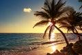 Palm tree on the tropical beach sunrise shot Royalty Free Stock Photo