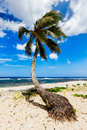 Palm tree on tropical beach in vanuatu Royalty Free Stock Photo