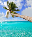 Palm tree in tropical perfect beach at Ibiza Stock Photos