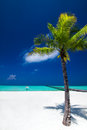 Palm tree in tropical perfect beach at maldives with jetty distance Royalty Free Stock Images