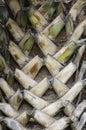 Palm tree trunk Royalty Free Stock Photo