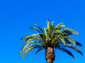 Palm tree on a turquoise background Stock Photography