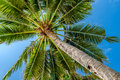 Palm tree under beautiful blue sky Royalty Free Stock Photo